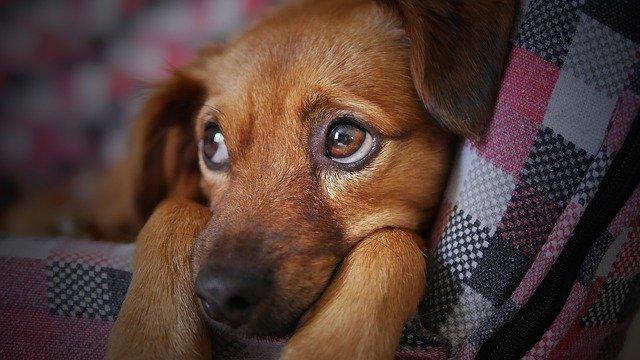 犬は泣くの?涙は流す?理由について