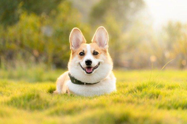 人気の飼いやすい中型犬は?おすすめ9種をご紹介