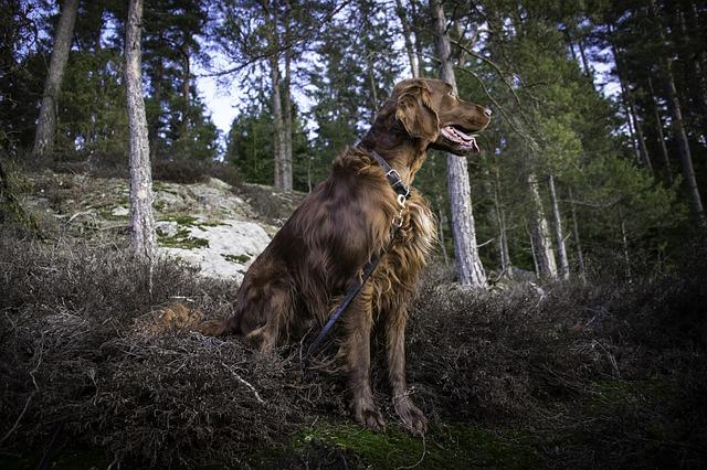 飼いやすい大型犬は?おすすめ11種をご紹介