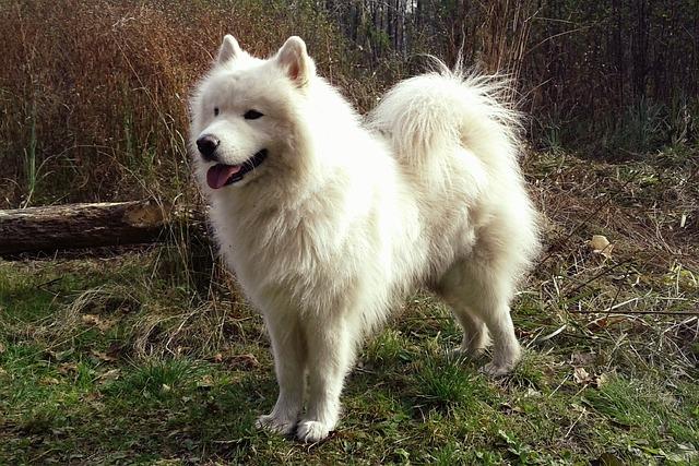 ふわふわがたまらない!白い犬種とは?7選