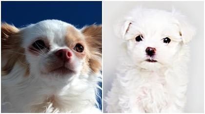 人気の可愛いミックス犬6選!種類、値段相場は?